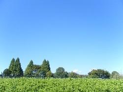20100925_001miyu