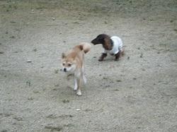 20101103_081miyu