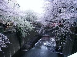 2011_04160013miyu