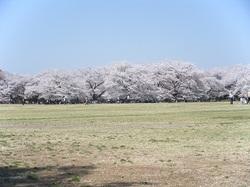 2011_04160044miyu