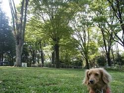 2011_04160058miyu