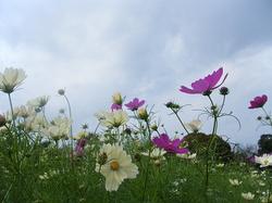 2011_10100096miyu