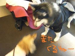 2013_04140206miyu